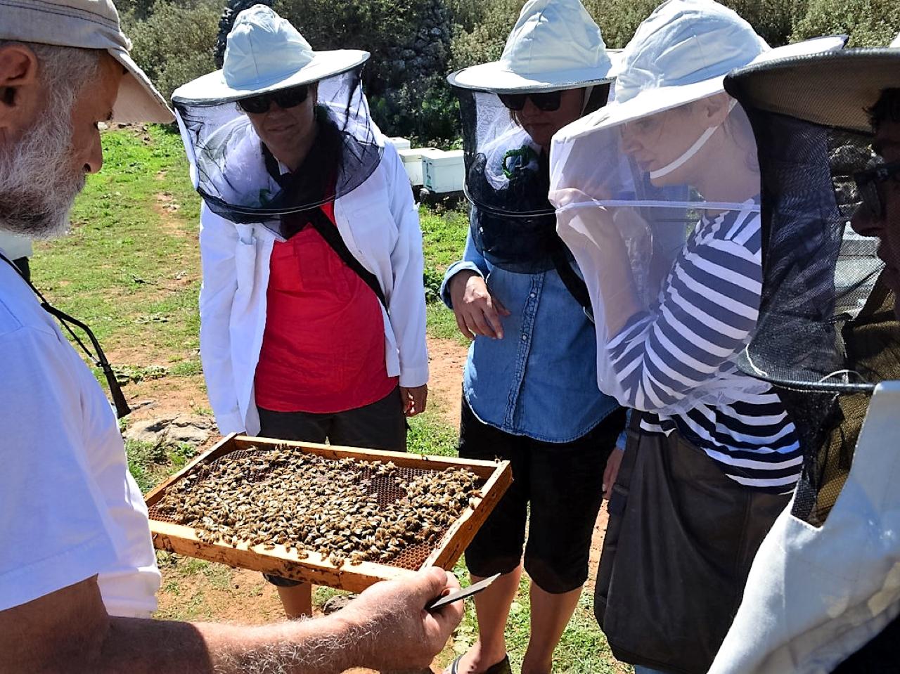 cretan honey, thyme honey, activities crete, crete car rental, crete car hire