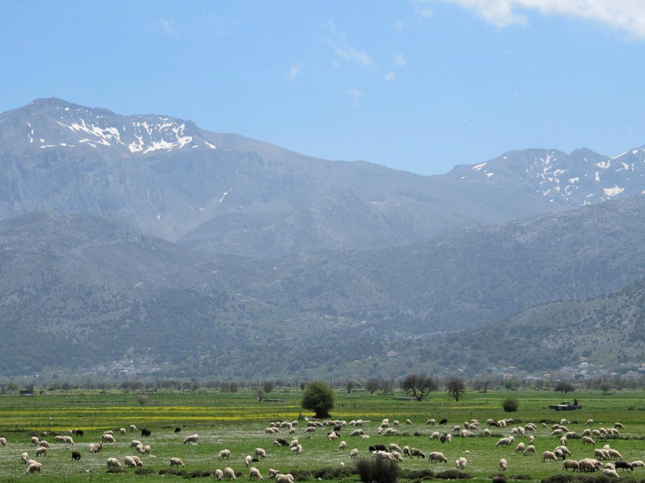lasithi plateau, dikti mountains, nature crete, spring holidays,