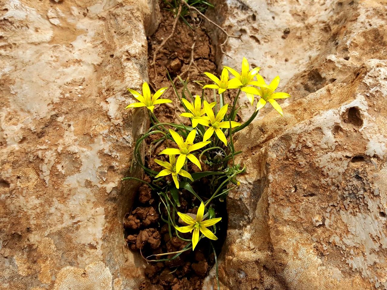 flowers, crete spring, greece spring, car rental, car hire